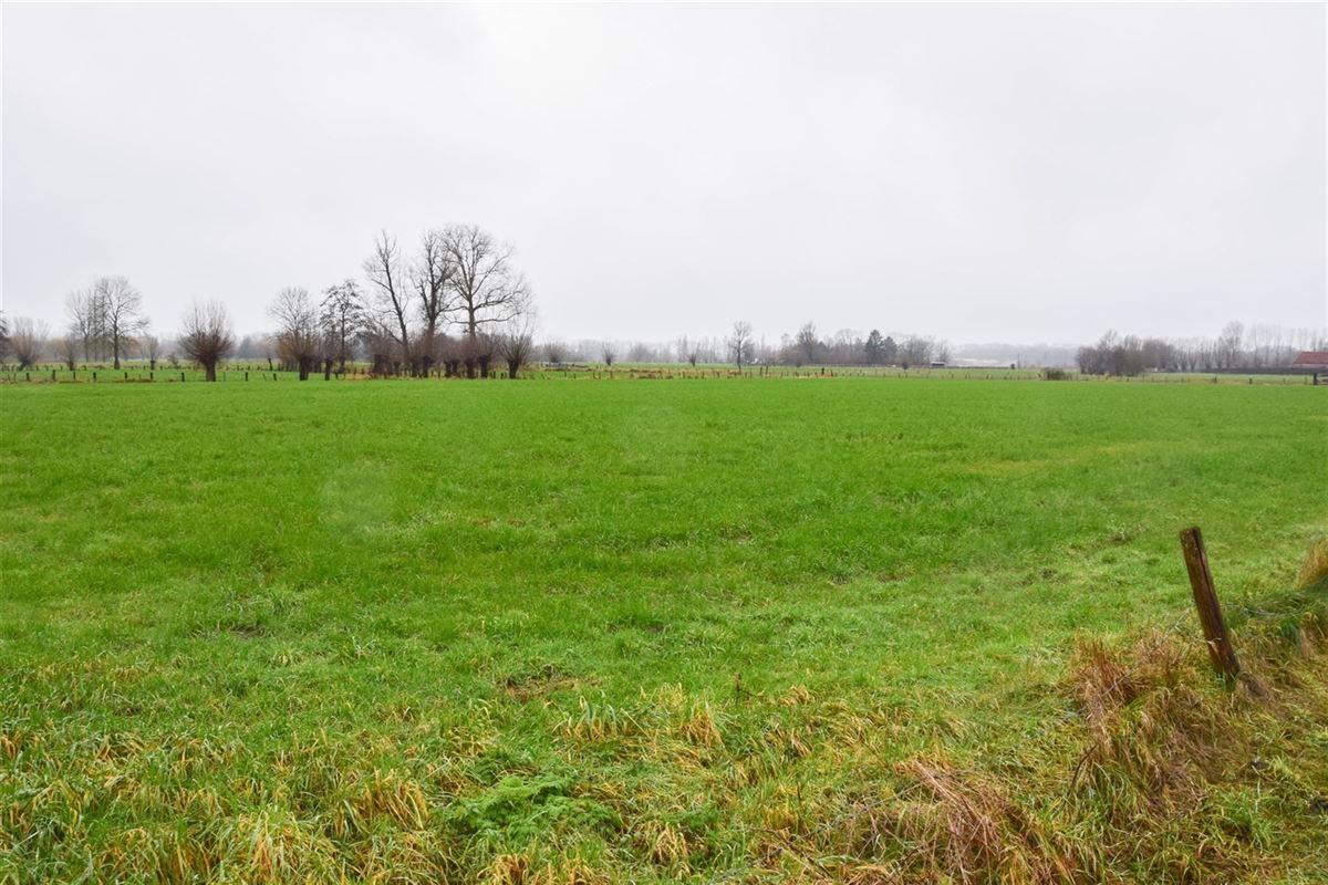Foto 2 : Bouwgrond voor landbouwactiviteit - Landbouwgrond te 9250 WAASMUNSTER (België) - Prijs 20 €/m²