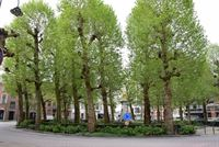 Foto 19 : Appartement te 9100 SINT-NIKLAAS (België) - Prijs € 265.000