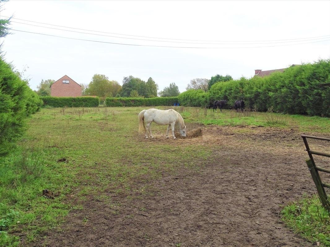 Foto 5 : Landbouwgrond te 2830 HEINDONK (België) - Prijs In optie