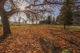 TRES BELLES PARCELLES DE TERRAIN (2 LOTS) DANS UN AGREABLE QUARTIER
